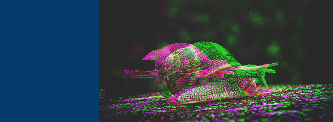 Picture of a snail.