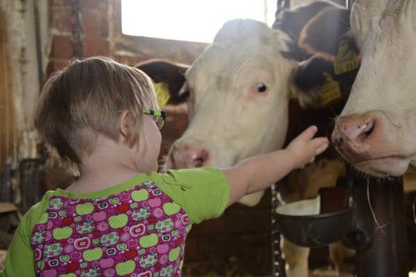 A disabled child at a community farm greeting cows