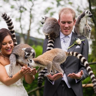 Bride and groom with some animals from the nearby zoo