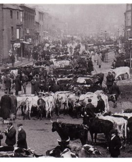 Skipton cattle market 1900